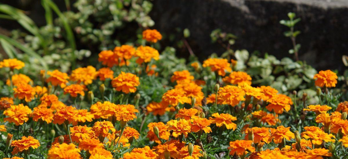 Sekretny Ogród